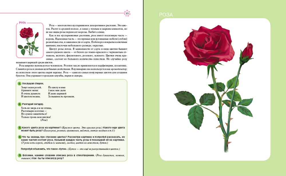 Цветы. Деревья. Тематический словарь в картинках: Мир растений и грибов (формат 70х90/16, 80 стр.)