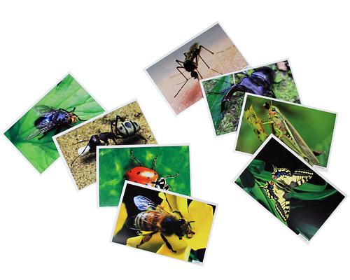 Расскажите детям о насекомых