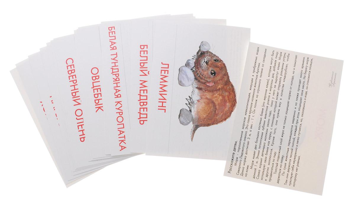 Маленький гений-Пресс Обучающие карточки Животные Арктики и Антарктики