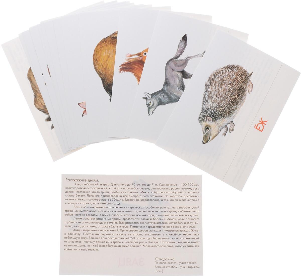 Маленький гений-Пресс Обучающие карточки Животные наших лесов