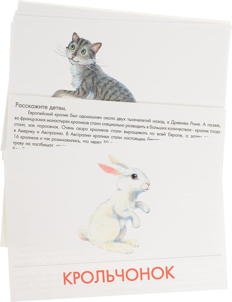 Маленький гений-Пресс Обучающая игра Домашние животные и их детеныши