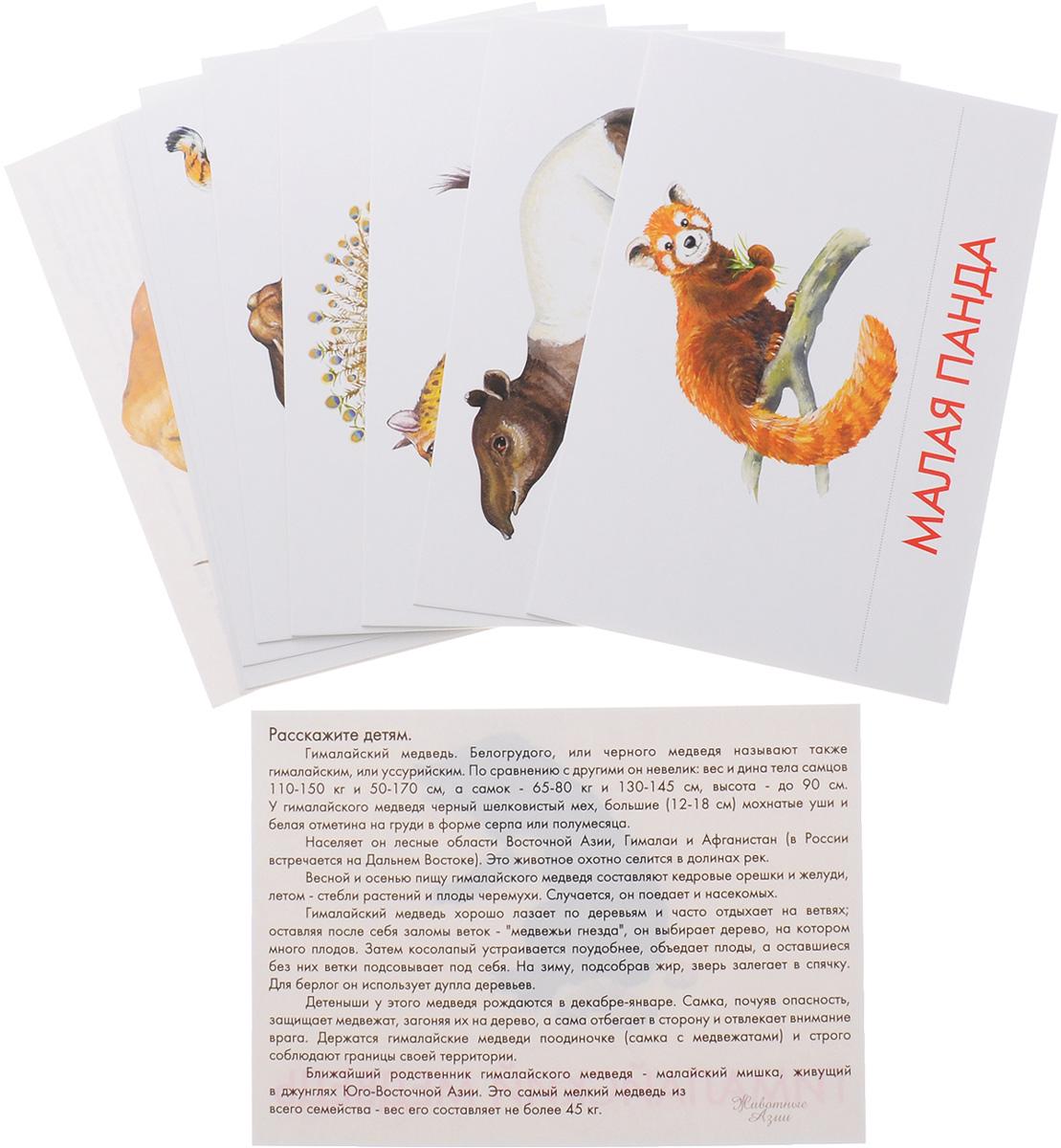 Маленький гений-Пресс Обучающие карточки Животные Азии
